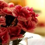 Capturing  Pink Blooms