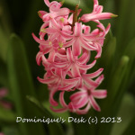 Admiring Pink Blooms