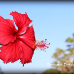 Random Blooms- Photographed on Vacation